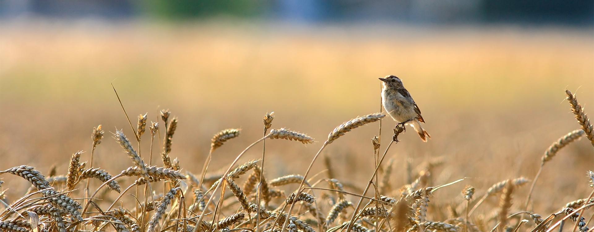 Le silence des oiseaux / B2-C1