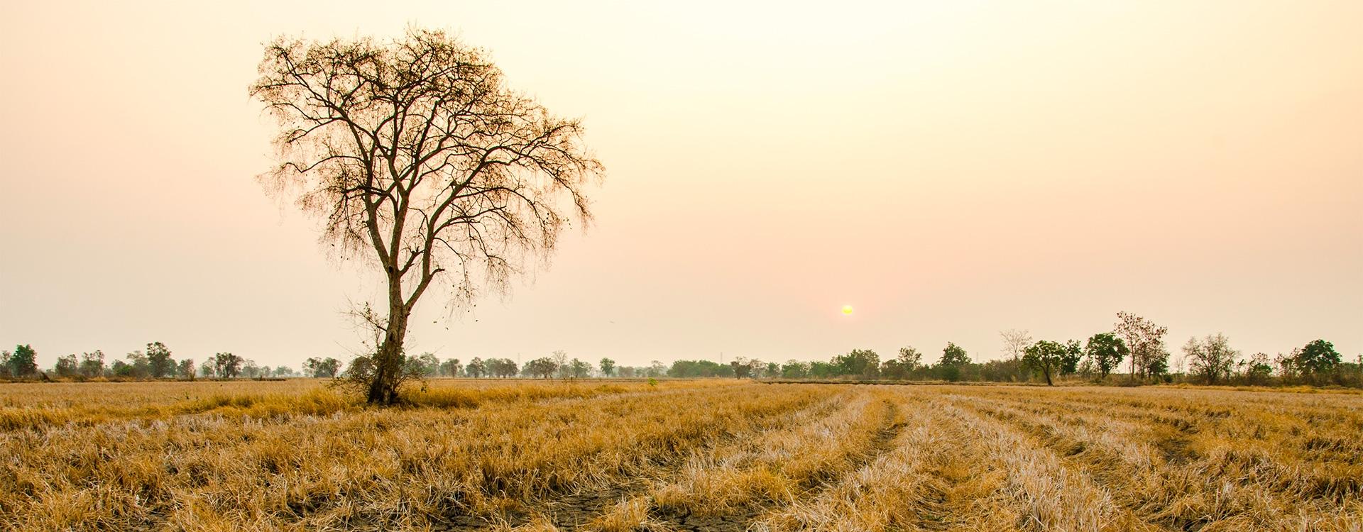 Les bons gestes en période de sécheresse