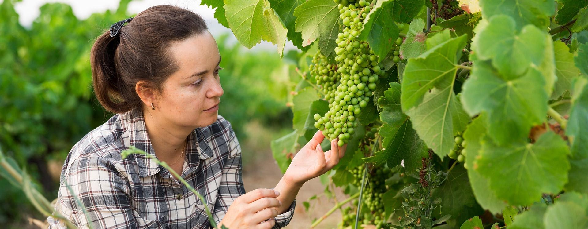 Les femmes dans le monde viticole (C1-C2)