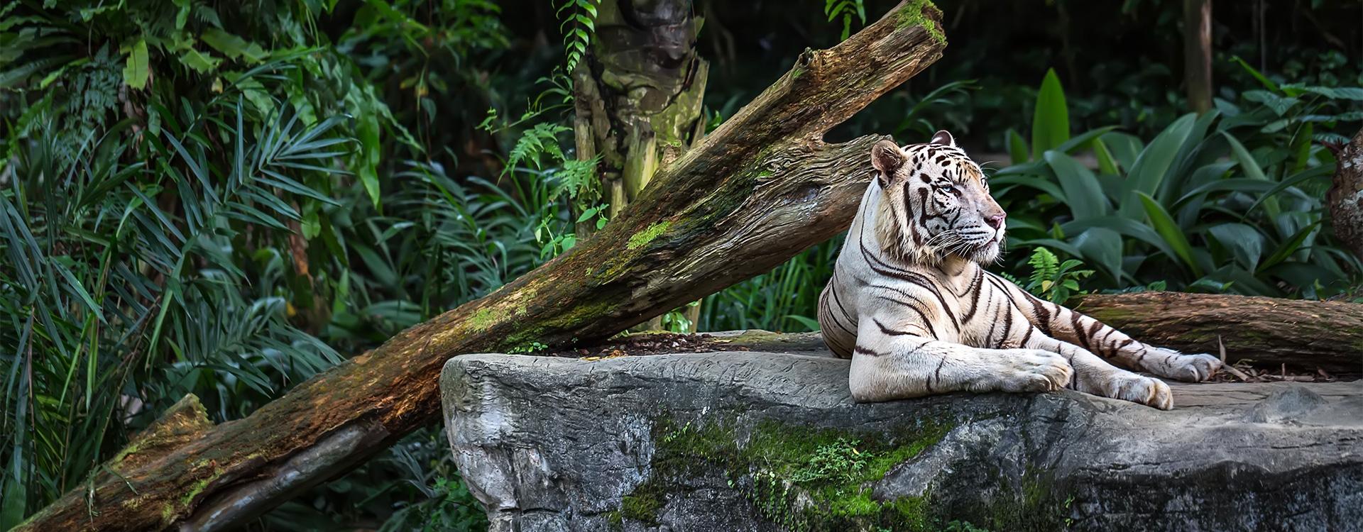 Naissances rares dans les zoos français / A2-B1